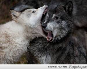 big mouth wolf